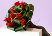 tulipas 1 - Jardim da Celeste
