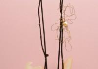 orquídea duas hastes 3 - Jardim da Celeste